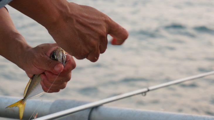 泳がせ釣り(飲ませ釣り)を堤防で!アジ・イワシ・サバでヒラメやキジハタなど高級魚が釣れる!