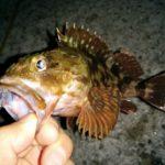 ガシリングのタックル・釣り方教えます!初心者でも簡単に釣れる癒されライトゲーム!