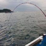 【和歌山 串本カセ】完全フカセをイワシ餌で!ブリが狙えてメジロは爆釣!