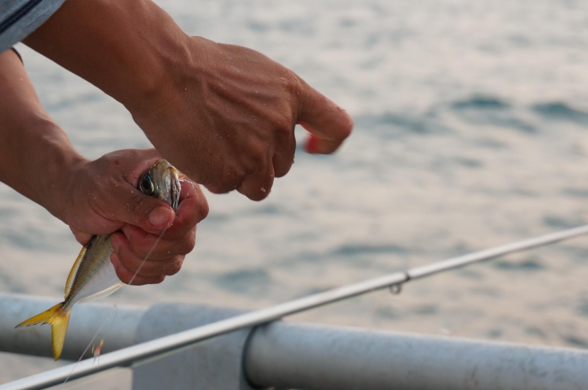 飲ませ釣り(泳がせ釣り)を堤防で!アジ・イワシ・サバでヒラメやキジハタなど高級魚が釣れる!